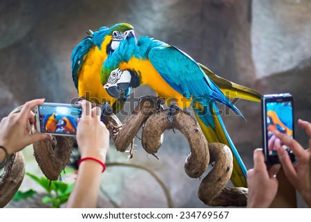 Tourists take pictures Macaw parrots - stock photo