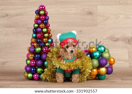 Toy poodle puppy near a decorative Christmas tree on wooden background - stock photo