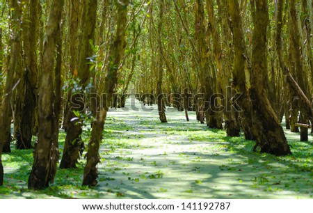 Tra Su flooded forest, Mekong Delta, An Giang, Vietnam - stock photo