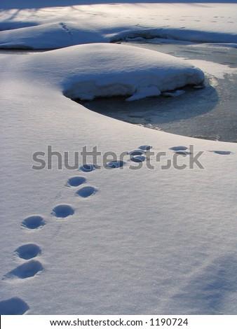 Traces on snow - stock photo