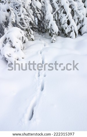 Track after a deer in winter forest - stock photo