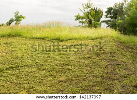 Track cut grass on the lawn, after passing mowers - stock photo