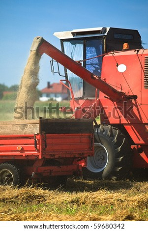 Tractor and combine harvesting wheat - stock photo