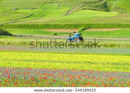 Tractor growing green spring colorful field. - stock photo