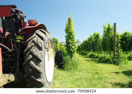 Tractor in a vineyard - stock photo