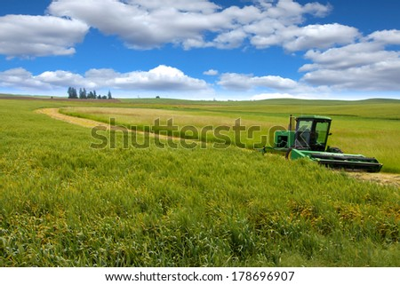 Tractor in the middle of wheat fields harvesting - stock photo