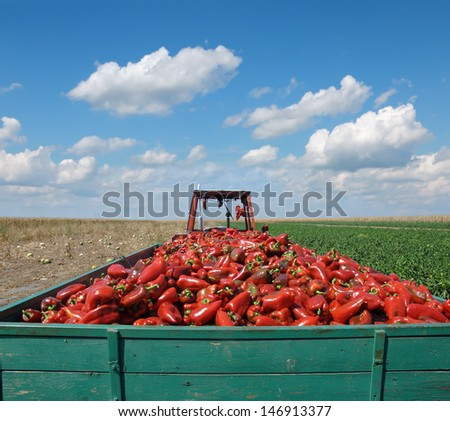 Tractor with heap of paprika after harvest - stock photo