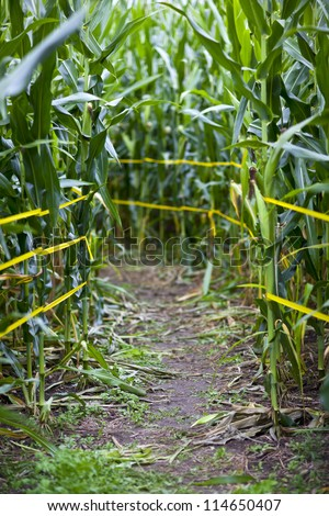 Traditional corn maze path in rural america - stock photo