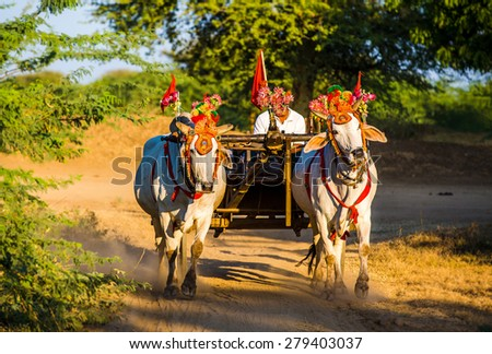 Traditional decorated cows in Bagan, Myanmar - stock photo