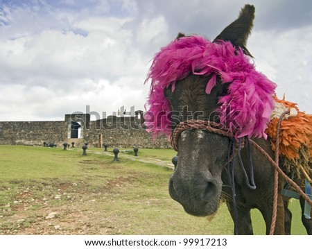 Traditional Donkey at the San Felipe Fortress in Puerto Plata, Dominican Republic - stock photo