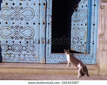 Traditional door in the Medina of Tunis, Tunisia, with curious cat. What's in there? - stock photo