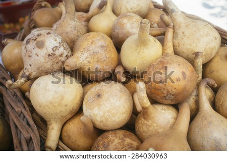 Traditional dry matte pumpkins Chilean countryside - stock photo