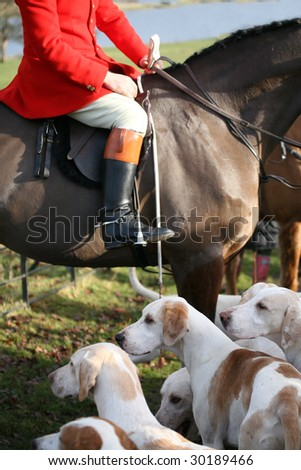 traditional fox hunting - stock photo