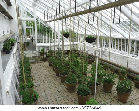 Traditional greenhouse or hothouse interior with tomato plants - stock photo