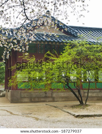 traditional korean pagoda with green tree and blooming sakura in Seoul palace - stock photo