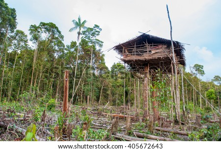 Traditional Koroway house perched in a tree  above the ground, Western Papuasia, former Irian-jaya, Indonesia - stock photo