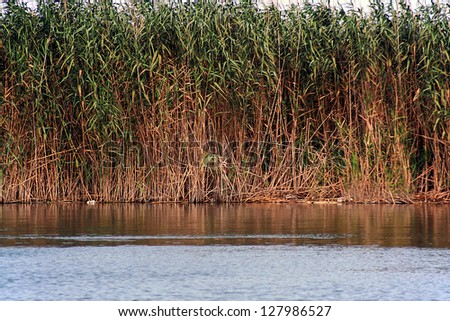 traditional  landscape in spanish natural reserve. Picture taken in la albufera, Valencia - stock photo