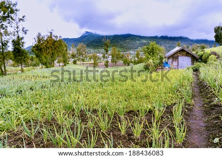 traditional onion farm and small house - stock photo