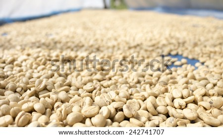 Traditional system of drying the coffee in the sun in plantation northern thailand - stock photo
