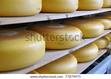 Traditionally made Dutch cheese ripening on shelves - stock photo