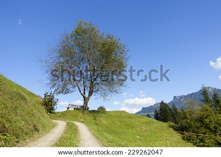 Trail for resting bench under the tree - stock photo