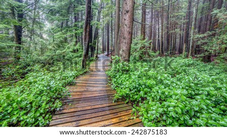 Trail in a British Columbia Forest - stock photo