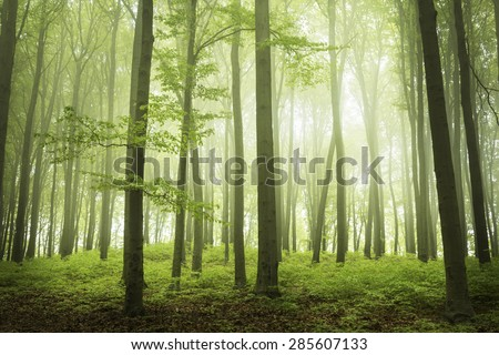 Trail in a foggy forest during spring. Green forest into the mist - stock photo