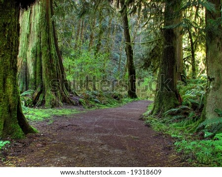 Trail in a Rainforest - stock photo