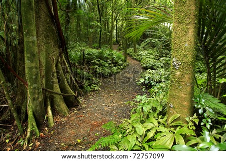 Trail in lush green tropical forest - stock photo
