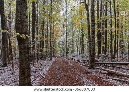 Trail in the autumn woods covered with snow. Nature - stock photo