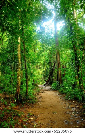 Trail in the jungle in Corcovado National Park, Costa Rica - stock photo