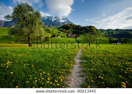 Trail in the middle of a green and blooming field - stock photo