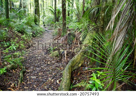 Trail inside New Zealand forest - stock photo