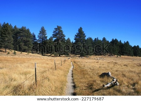 Trail leading through a meadow in the mountains, California - stock photo