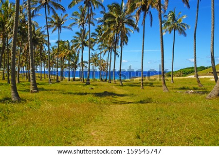 Trail Leading to Tropical Beach with Palm Trees and Blue Skies - stock photo