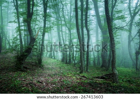 Trail through a mysterious dark forest in fog with green leaves. Spring morning in Crimea. Magical atmosphere. Fairytale - stock photo