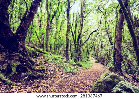 Trail through a mysterious inspirational beautiful landscape, dark forest with green leaves. Spring fairytale morning, magical atmosphere in La Gomera, Canary Islands Spain. - stock photo