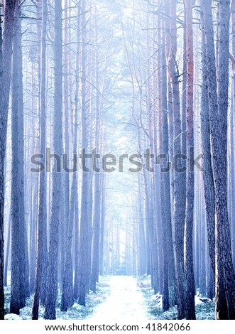 Trail through forest in winter - stock photo