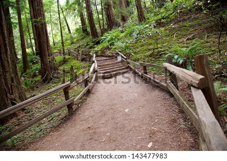 Trail through Muir Woods National Monument in San Francisco, California - stock photo