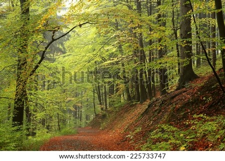 Trail through the autumnal forest. - stock photo