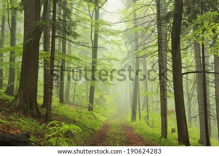 Trail through the foggy spring forest. - stock photo