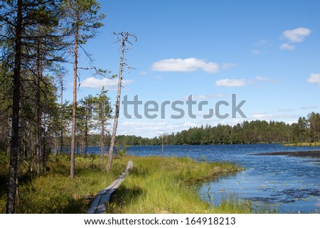 trail through the swamp forest in the summer - stock photo