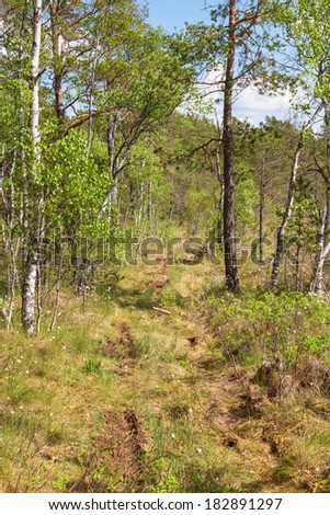 Trail through the woods on a bog - stock photo
