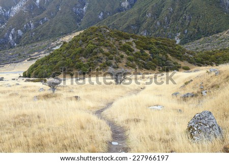 Trail through tussock in Hooker Valley leading to Aoraki, Mount Cook, highest peak of Southern Alps in Aoraki Mount Cook National Park, Canterbury region, South Island, New Zealand. - stock photo