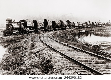 Train of huge redwood logs of the Excelsior Redwood Company of Eureka, California. Ca. 1900. - stock photo