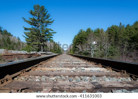 Train tracks receding into the distance in the woods. A large tree is on the left, along with some old sections of rail. Old telegraph poles are on the right. - stock photo