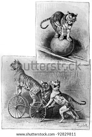 "Trained dog and the tiger. Engraving by Specht. Published in magazine ""Niva"", publishing house A.F. Marx, St. Petersburg, Russia, 1893 - stock photo"
