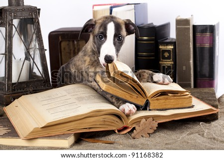 trained dogs with books - stock photo