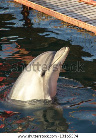 Trained dolphin on Black sea. Photography. - stock photo