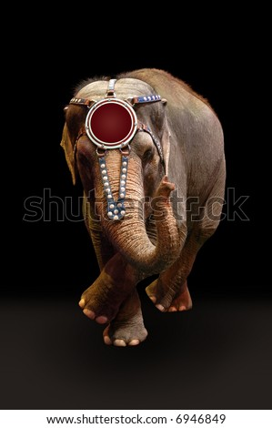 Trained elephant performing a dance over a dark background. - stock photo